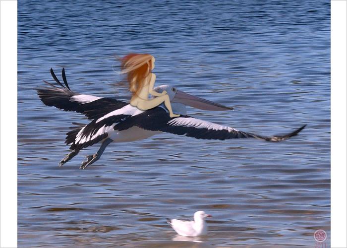 Pelican-fairy