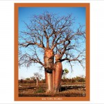 photo manipulation of boab trees